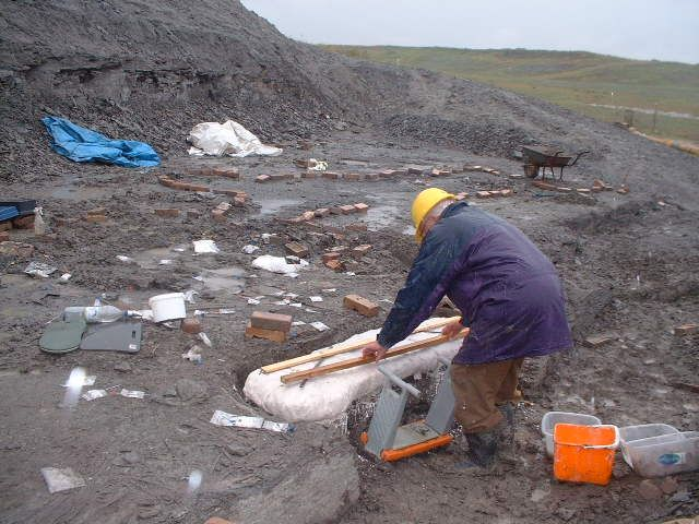 Alan plasters right pectoral fin of Leedsichthys in the rain